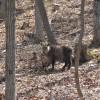 野生動物に遭遇するとテンション上がる|動物写真も掲載していきます