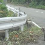 サルに対する不思議な親近感|ニホンザルとの遭遇写真(1)