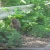 餌を器用に食べる姿にホッコリ|ニホンザルとの遭遇写真(5)
