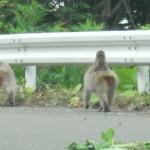 サルの親子との遭遇に感じる愛着|ニホンザルとの遭遇写真(2)