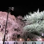 花見の季節|弘前公園で日本一の桜の写真を一挙公開~