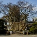 広島駅界隈で最大料金(上限)の安い駐車場を探す|夜間無料あり!
