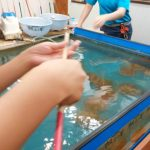 青森駅前の帆立小屋は500円で3分間のホタテ釣りが体験できる